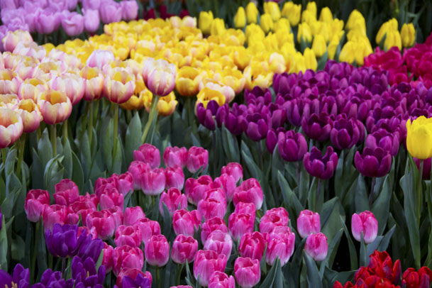 0042013 flower garden show