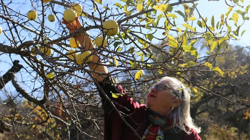 Elizabeth Ryan Apple Farms Climate Change