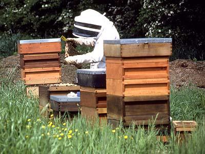 11_beekeeping