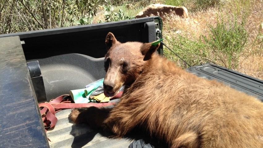 150428-backyard-bear-03