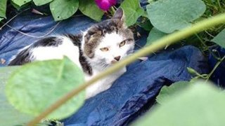 A cat in some leaves