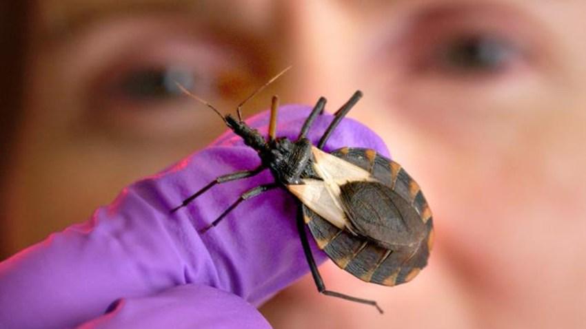 4-24-19 woman holding bug