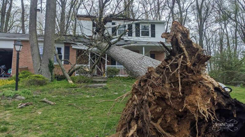 Powerful Winds Topple Trees Throughout the Region