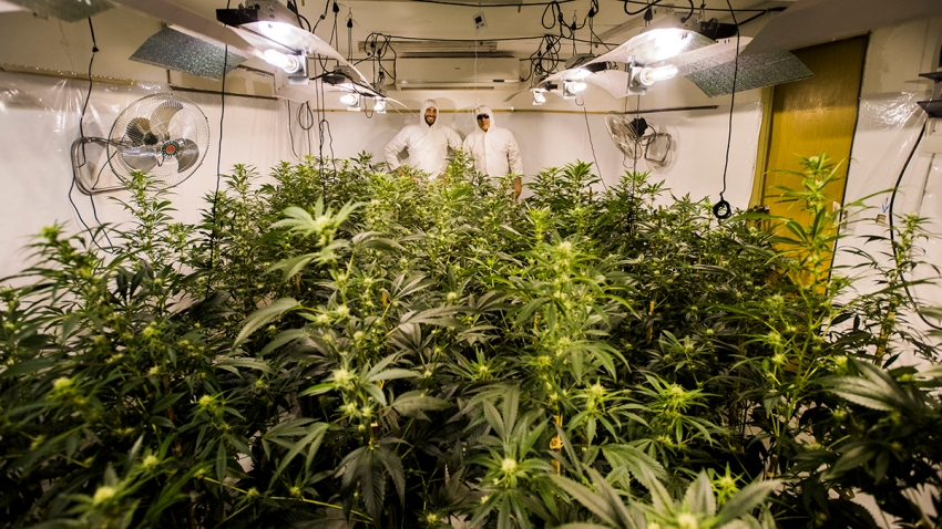 APTOPIX Uruguay Marijuana Clubs Photo Gallery
