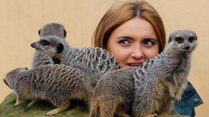 Britain London Zoo Count