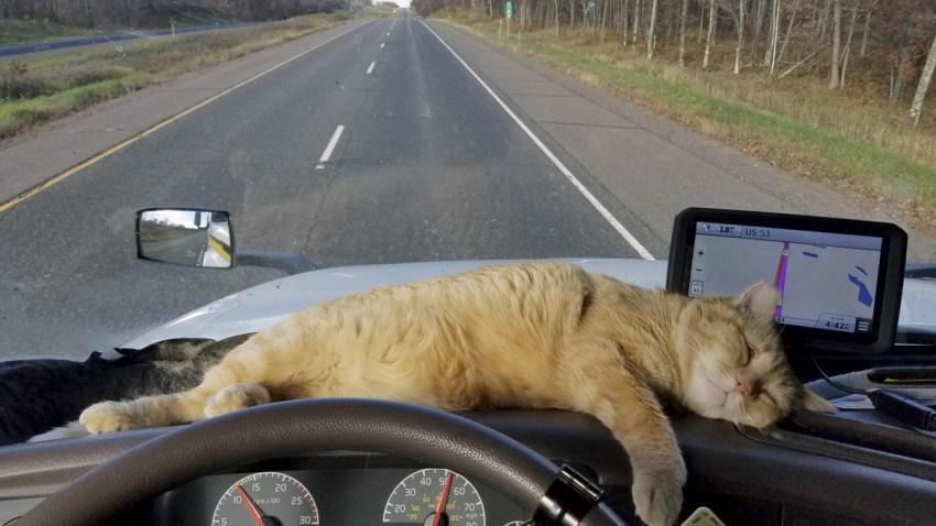 ODD Stowaway Cat Semi