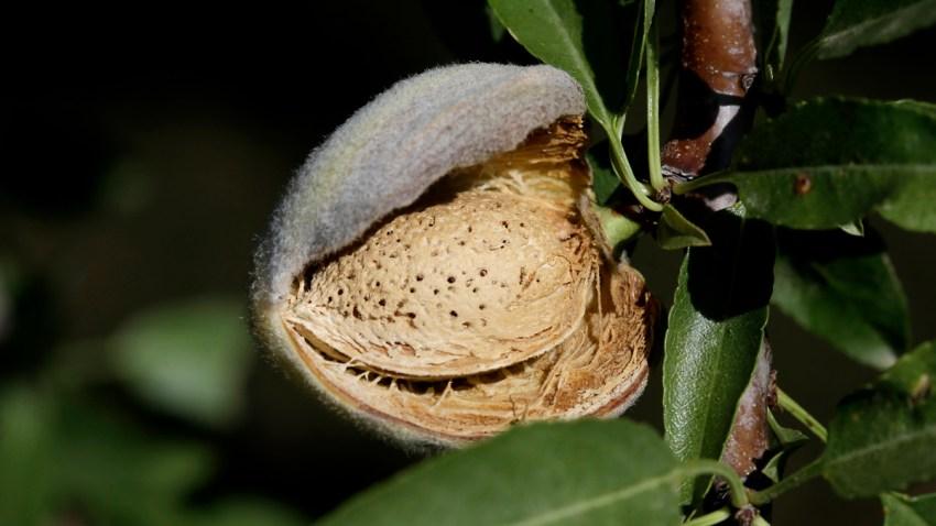 California Pesticide Restriction