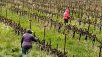 Farmworkers Key to Keeping US Fed Are Wary of Virus Spread