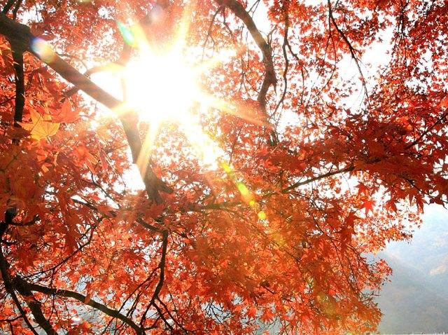 Autumn-Leaves-Sun-83911127