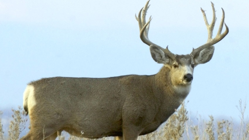 Deer Hunting Season Begins This Week