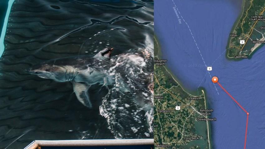 Cisco Shark Cape May Delaware Bay