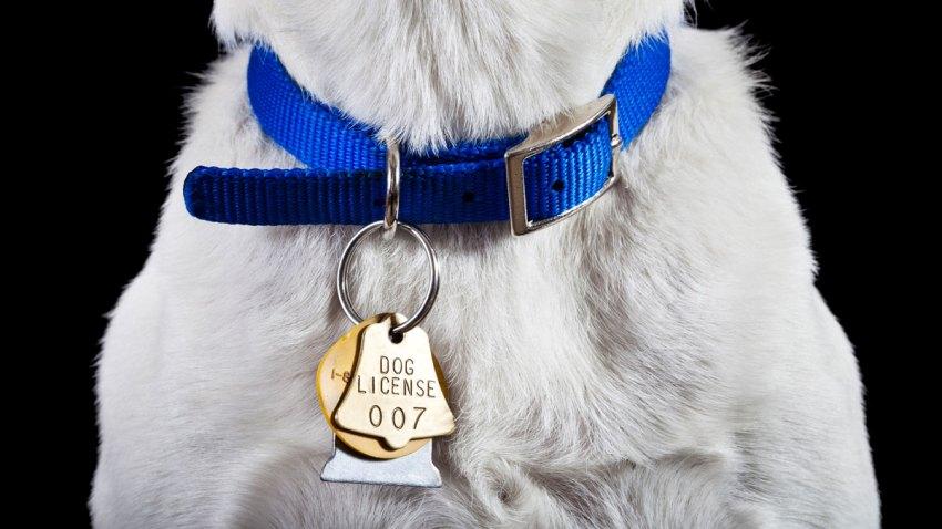 Dog Collar Generic Stock