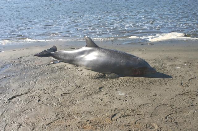 Dolphin Dec 25th