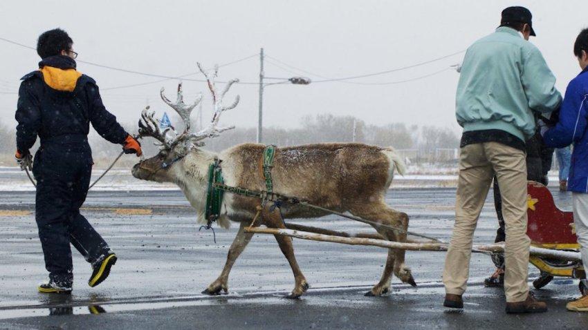 Dominos Reindeer Delivery