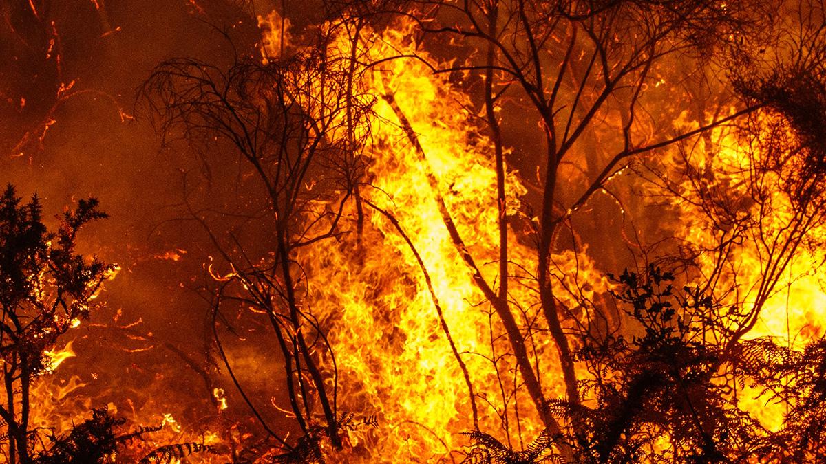 Crews Battle Fire in Delaware Water Gap Recreation Area