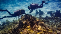 Earth's Coral Reefs Could Be Gone by 2100, Research Finds