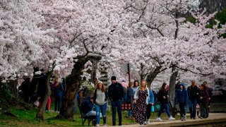 In this March 21, 2020, file photo, Washingtonians and tourists walk around the tidal basin to see the Cherry Blossoms despite the social distancing recommendations issued by officials in Washington, DC.