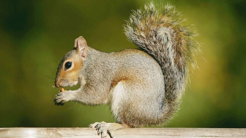 SB002_squirrel