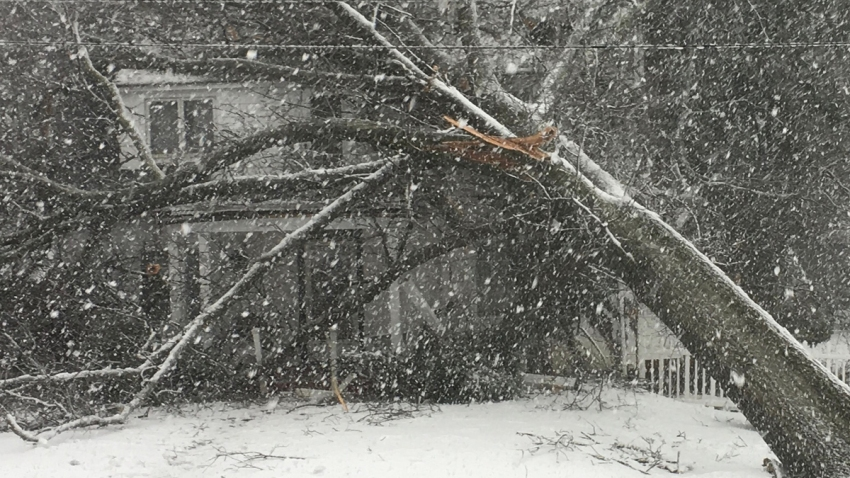 Heavy Snow Tree Falling March Noreaster Jody Allen Evangeliata cp