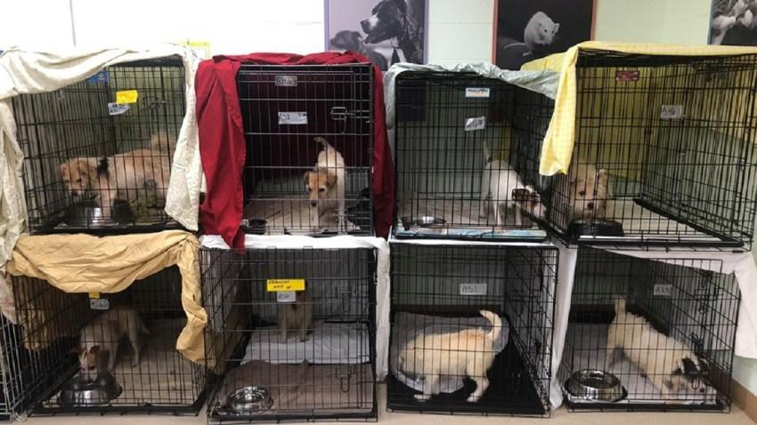 Hoarded Dogs Hunterdon
