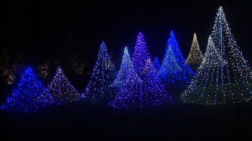 Morris Arboretum lights