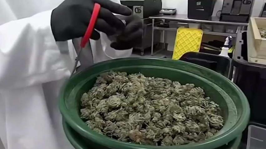 NJ_Takes_Up_Marijuana_Legalization_Bill.jpg