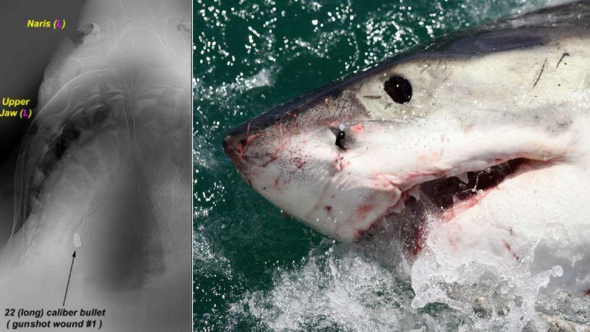 SharkShot