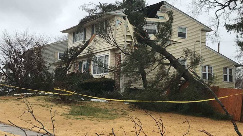 Tree onto home