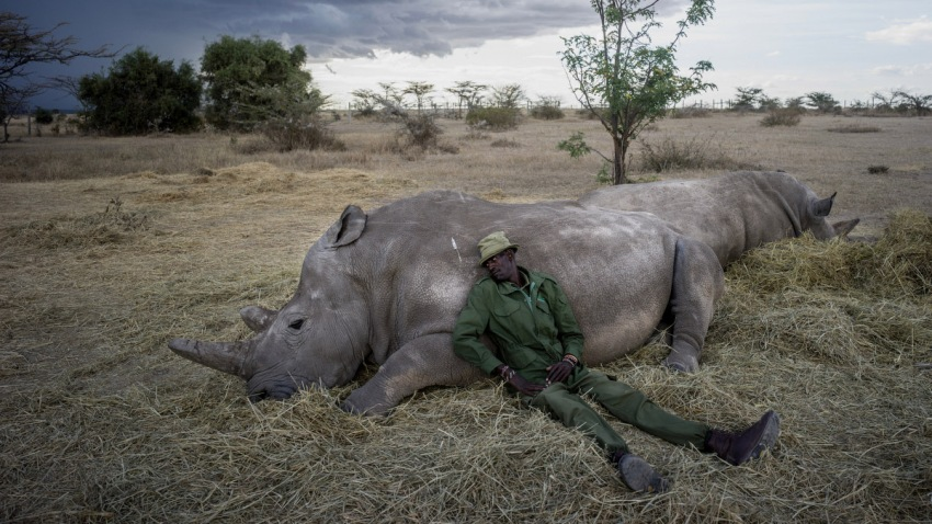 The Last Remaining Northern White Rhinos_016