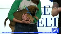 From Providence Animal Center to Puppy Bowl