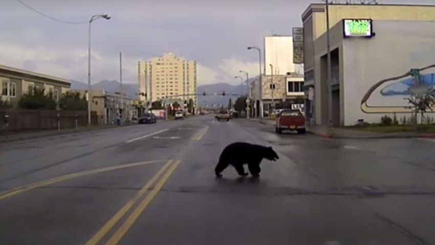 bear-2016-09-20-at-8.01.58-PM