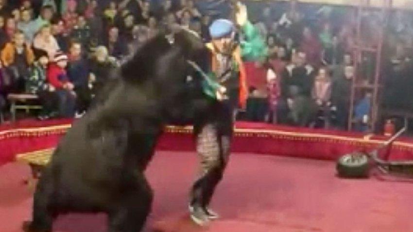 Russia Bear Attack