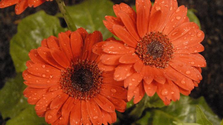 flowershow2010edit