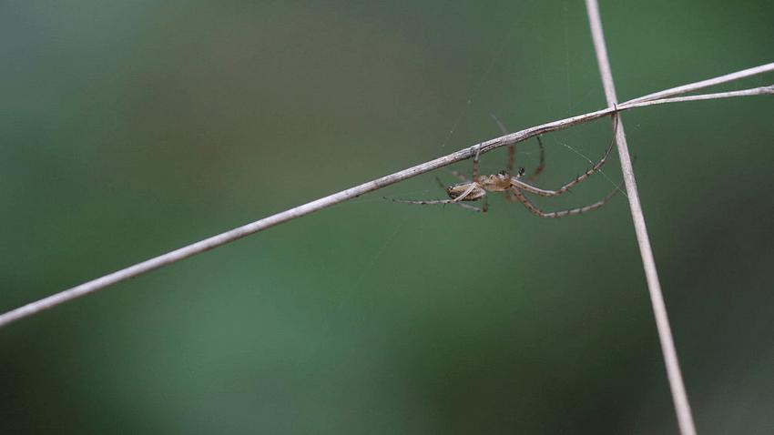 generic spider1