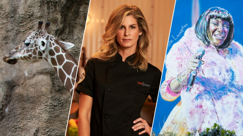 Giraffe, Chef Jennifer Carroll, Street Art featuring Patti LaBelle