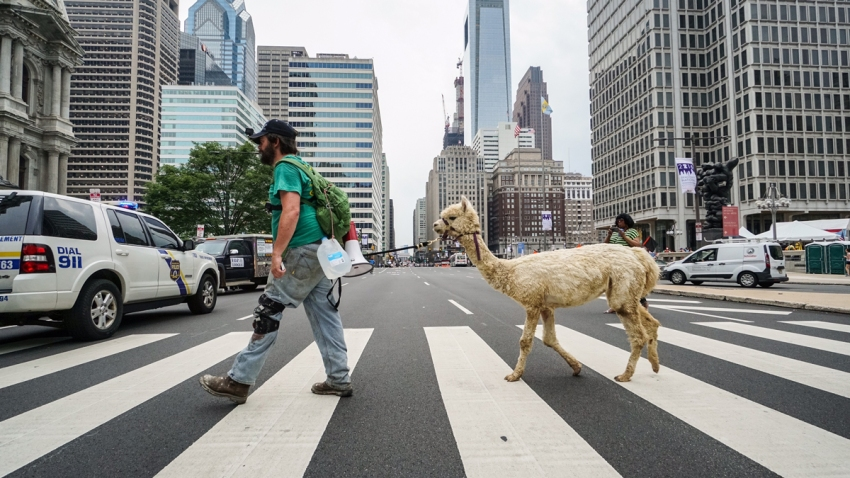 philly alpaca
