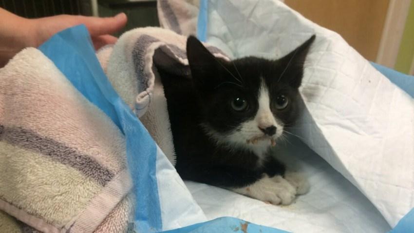 police kitten resized