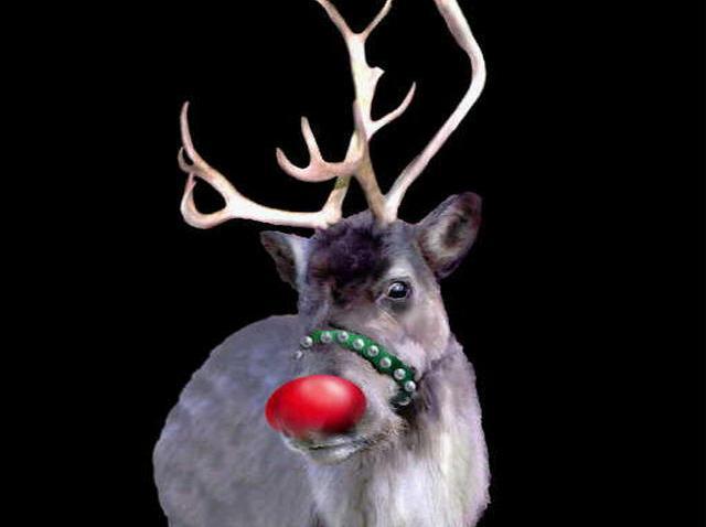 111908 Reindeer Main
