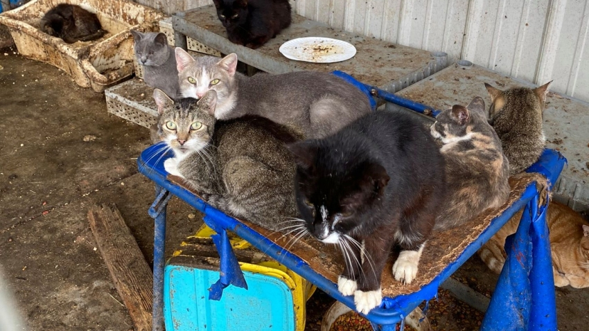 Several cats are shown sitting in squalid conditions