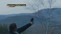 Rockefeller the Owl Returns to Natural Habitat After Christmas Tree Ride to NYC