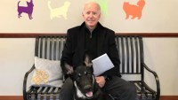 Delaware Dog Getting 'Indoguration' as Joe Biden Heads to the White House