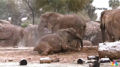 Watch: Elephants Enjoy a Snow Day in Tucson