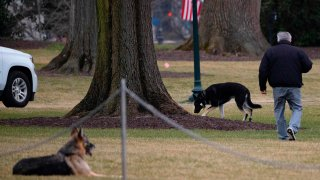 First dogs Champ and Major Biden are seen on the South Lawn of the White House in Washington, DC, on January 25, 2021.