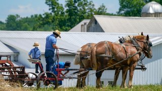 People in Amish attire prepare a horse team to work on a farm.
