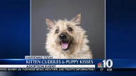 Kitten Cuddles and Puppy Kisses