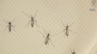 West Nile Virus Found in New Jersey County