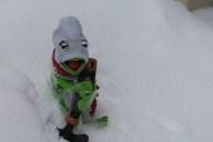 [UGCPHI-CJ-weather]Kermit the frog