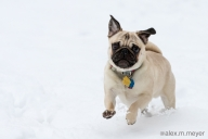 [UGCPHI-CJ-weather]Calvin in the snowstorm