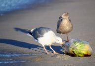 birdsonbeach1