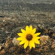 Flower in Burn Area